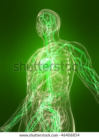 healthy vascular system