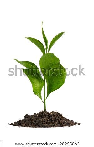 Heap dirt with a green plant. Isolated on white background