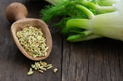 Heap of dried fennel seeds in wooden spoon with fresh fennel bulbs, fragrant herbaceous plant (Foeniculum vulgare)