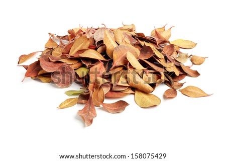 heap of dry leaves. isolated on white background