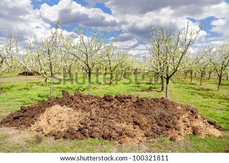 Heap of dung with orchard in background