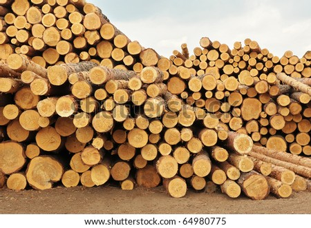 Heap of forest product stored in timber enterprise