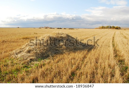 heap of hay on a field - stock photo