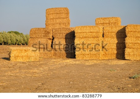 Heap of hayricks.