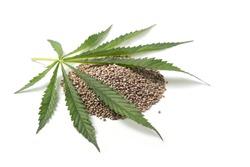 Heap of hemp seeds with hemp leaf on white background. Cannabis Sativa.