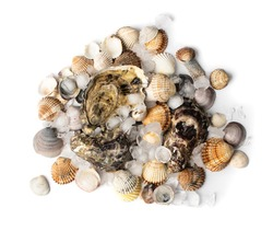 Heap of iced oysters and mussels isolated on white background top view. Raw molluscs and shellfish closeup