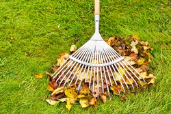 Heap of leaves and rake on green garden lawn, garden works and cleaning in autumn.