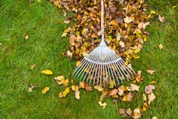 Heap of leaves and rake on green garden lawn, garden works and cleaning in autumn. Top down view from above.