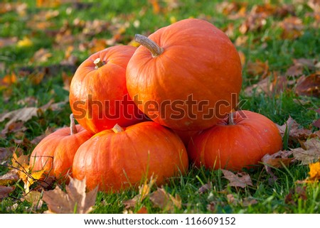 heap of pumpkins outdoor