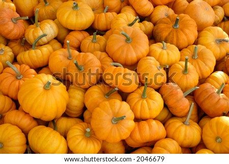 Heap of small pumpkins