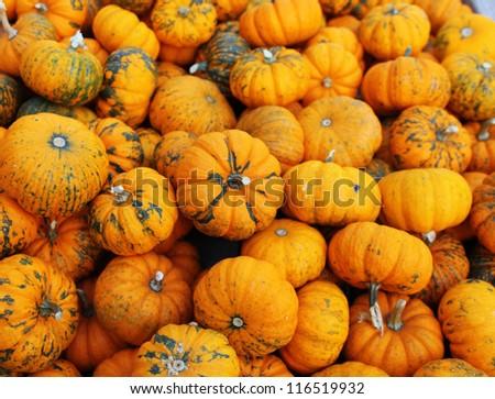 heap of tiny pumpkins