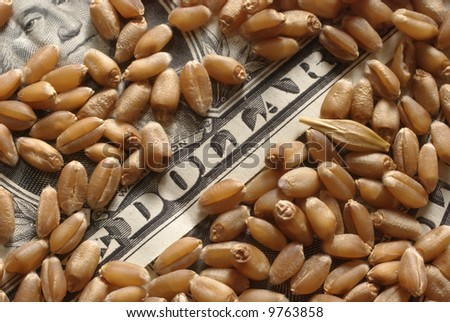Heap of wheat and money in close up