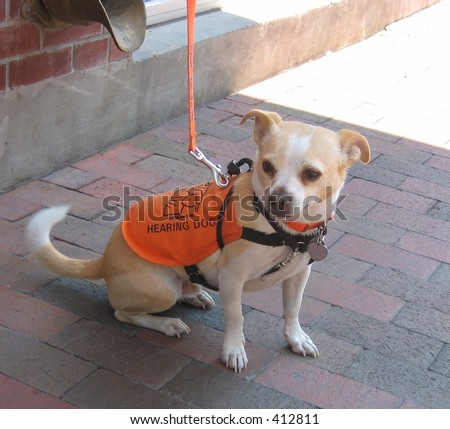 hearing dog