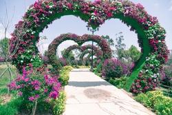 heart arches pathway in Da Lat Flower Park, Vietnam