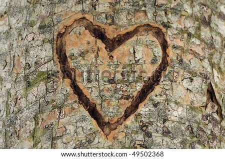 heart carved in tree trunk