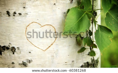 Heart curved on a birch