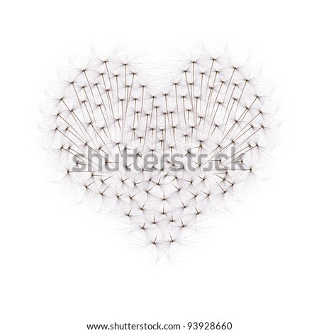 heart from dandelion seeds isolated on white background