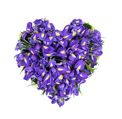 heart from flowers, a bouquet from the irises, isolated, on the white