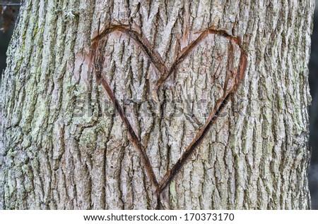 Heart in the tree.  Stockfoto ©