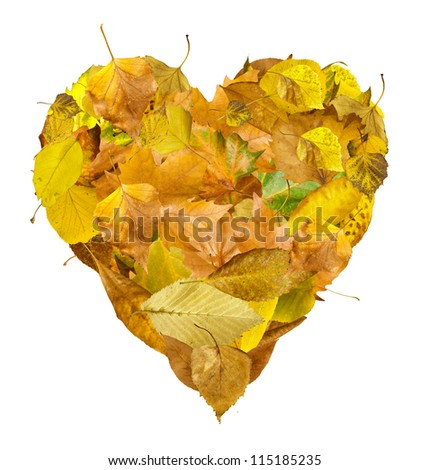 Heart made of autumn leaves. White isolated