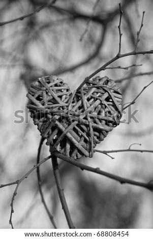 heart made of branch in a tree - stock photo