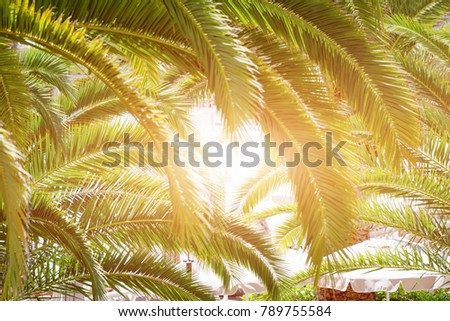 Heart made of palm tree leaves. Travel and summer tourism concept. - Shutterstock ID 789755584