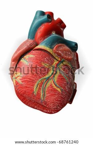 heart - model
