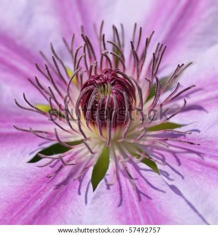 heart of a purple flower