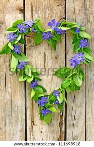 heart of flower evergreen