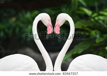 Heart of pink flamingos