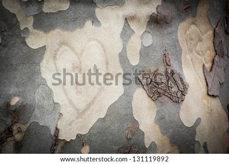 Heart on tree bark.