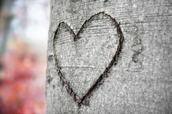 Heart shape carved in a beech tree bark in autumn mood