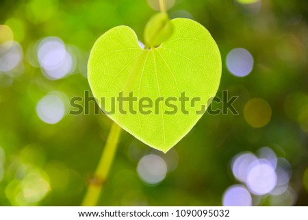 Heart shape leaf with bokeh #1090095032