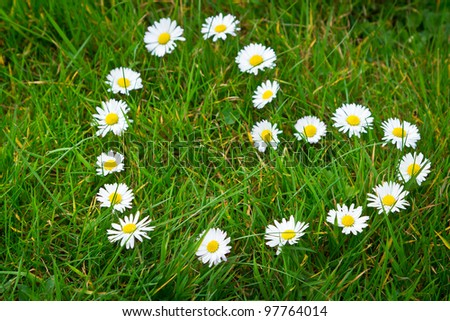 Heart shape made from daisy flowers