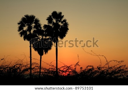 heart shape palm tree with sunset background