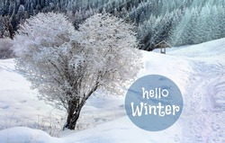 Heart shape tree & hello winter in snow white scene landscape. Snow and heart tree of love, hello winter in blue sunlight. Beautiful landscape with heart shaped tree. Hello winter background.