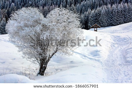 Heart shape tree in winter snow white scene landscape. Snow and heart tree of love, winter in blue sunlight. Beautiful landscape with heart shaped tree. Hello december or january winter background.