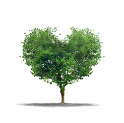 Heart shape tree over a white background - Love and nature concept