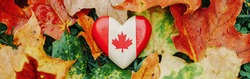 Heart shape wooden Canadian flag. National symbol lying in autumn fall maple leaves. Canada Day celebration. Thanksgiving holiday in Canada. Banner header for website.