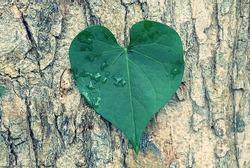 Heart shaped leaf and tree skin background