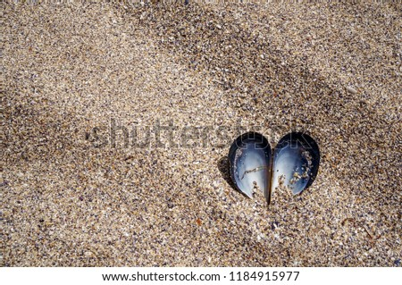 Stock Photo Heart shaped opened mussel shell in the dry beach sand. Summer love concept.