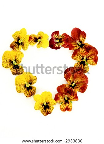 Heart shaped  Pansy and Viola flowers isolated - stock photo