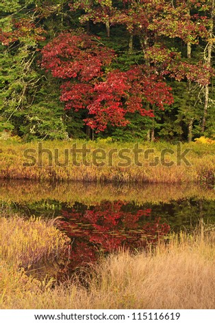 Heart-Shaped red tree reflected in Fly Pond in the Adirondack Mountains of New York - stock photo