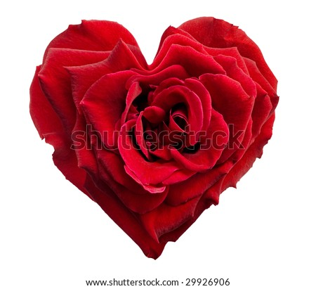heart shaped rose isolated on white background