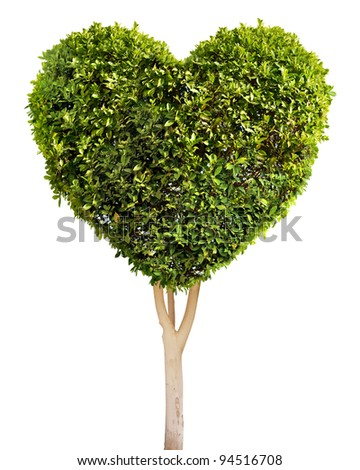 Heart shaped tree. Isolated on white.