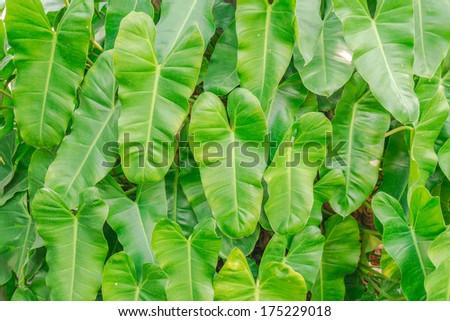 Heart symbol green leaf #175229018