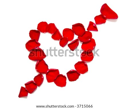 Heart with arrow. Rose petals isolated on white.