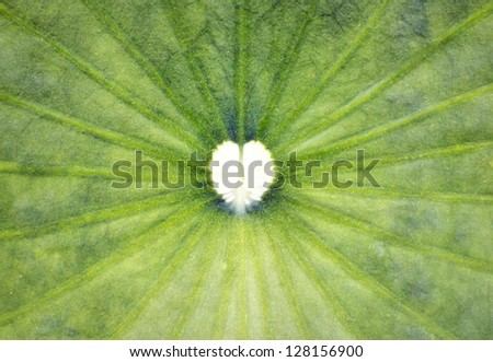 Hearth shape on lotus leaf