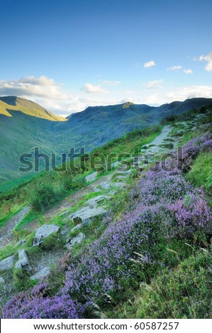 Heather by the footpath on Birkhouse Moor, English Lake District