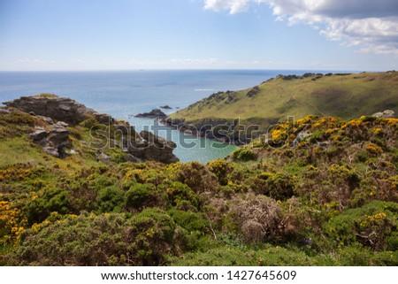 Heathland near Starehole Bay, Devon, England. #1427645609